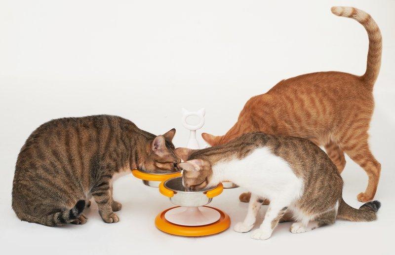 Catswall新型防蟻專利碗架