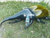 甲蟲造形浮墊(赫克力士)[單位:隻]