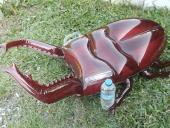 甲蟲造形浮墊(鍬形蟲)[單位:隻]