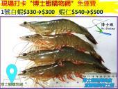 白蝦系列~1號白蝦(已售完)